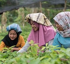 Jeunes femmes dans les rizières