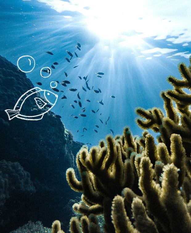 Recif corallien