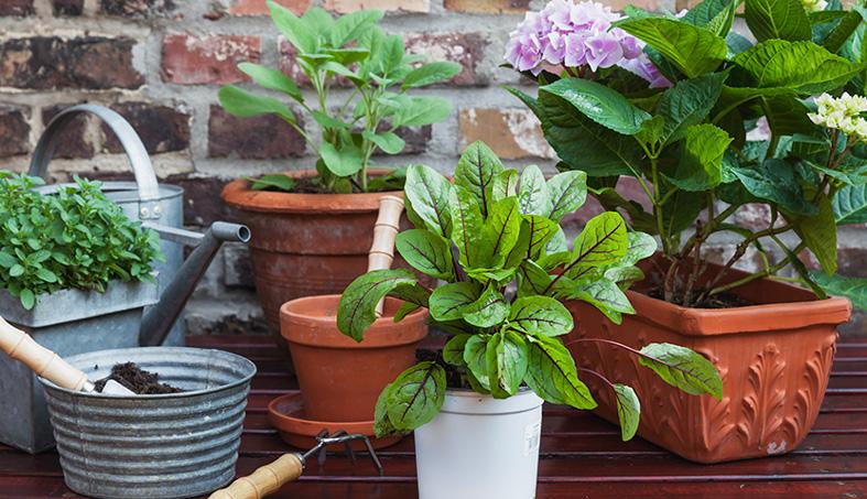 Ces plantes vertes qui vous veulent du bien