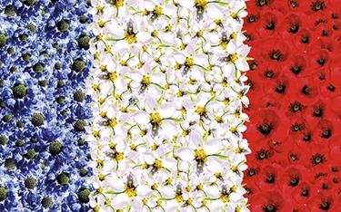 French Days - Clarins
